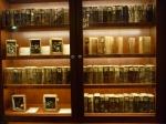 Mark Dion -Holzbibliothek